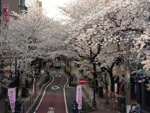 th_1桜丘3_23