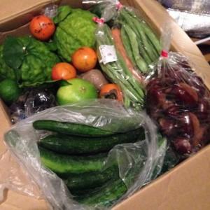 小新鮮鹿沼野菜