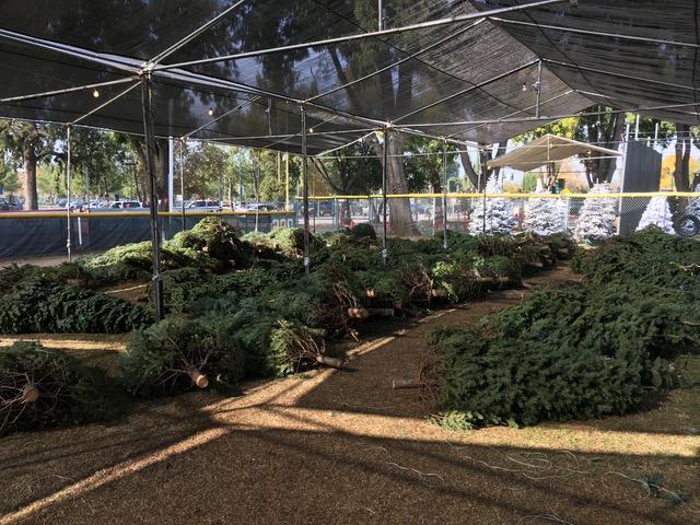 オレゴンファミリーのクリスマスツリー2